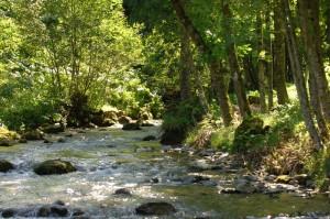 peche-riviere-chatel-715